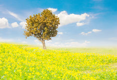 Tree on Meadow flowers. Stock Photography