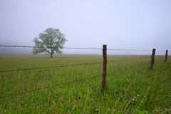 Tree in the meadow with fog Royalty Free Stock Image