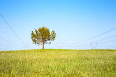 Tree on meadow and high-voltage line Royalty Free Stock Photos