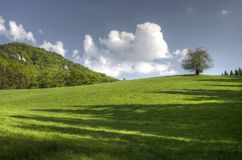 Tree, meadow and hill Royalty Free Stock Images
