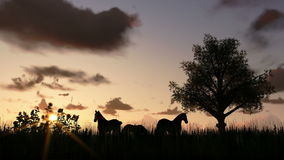Tree on meadow and horses at sunset, time lapse clouds stock video