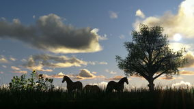 Tree on meadow and horses, time lapse clouds stock footage
