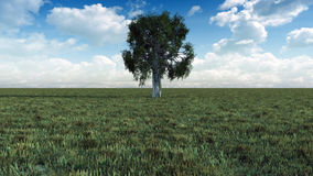 Tree In Meadow Royalty Free Stock Photography