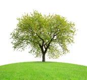 Tree on meadow Stock Image
