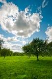 Tree on meadow landscape Stock Photo
