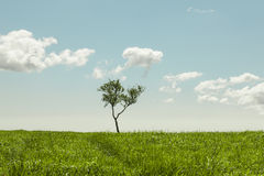Tree in the meadow Stock Images