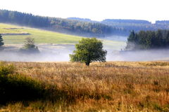 Mist in meadow, Dresden, Germany Stock Photo