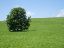 Tree on a meadow with sky Stock Photo