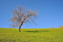 Tree on meadow and sky Royalty Free Stock Photos