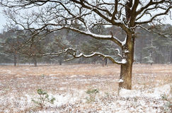 Tree on meadow in snowy winter Stock Photos