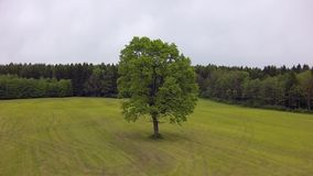 Tree on a meadow in summer,. Upper Bavaria, Bavaria, Germany, Europe stock footage
