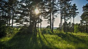 Tree and meadow sun shining through trees stock images