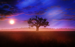 Tree And Meadow Sunset With Fading Aurora. Tree in a vast meadow with hills on the background, clouds on the sunset sky and fading northern lights of the aurora Stock Photography