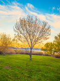 Tree on meadow at sunset .  ( Filtered image processed vintage e Royalty Free Stock Photos