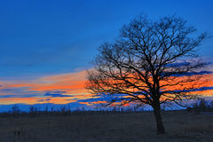 Tree on meadow after sunset Stock Photos