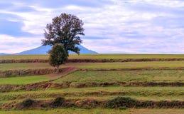 Tree in the meadows of Ainhoa Stock Photos