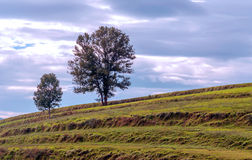 Tree in the meadows of Ainhoa Stock Photography