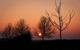 Tree in the meadows in the countryside at sunset dutch netherlands stock photos