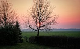 Tree in the meadows in the countryside at sunset dutch netherlands royalty free stock photos