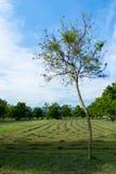 Tree med en ljus sky Fotografering för Bildbyråer