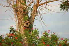 Tree med fågelhuset Royaltyfria Bilder