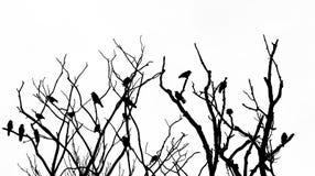 Tree med fåglar Arkivfoto