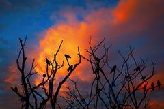 Tree med fåglar Arkivbild