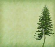 Tree med gammala den pappers- grungeantikviteten Royaltyfri Fotografi