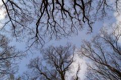 Tree med ingen leaf Fotografering för Bildbyråer