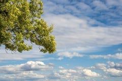Tree med moln Arkivbilder