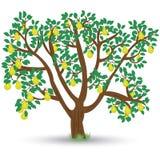 Tree med pears Arkivbilder
