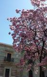 Tree med rosa blommor fotografering för bildbyråer