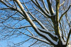 Tree med snow Royaltyfri Foto