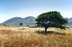 Tree in a mediterranean Landscape Stock Photo