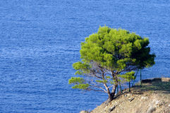 Tree and sea Stock Photography