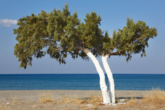 Tree and Mediterranean sea at sunrise in Plakias. Crete. Greece Royalty Free Stock Photos