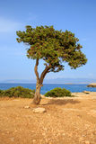 Tree on mediterranean seashore Royalty Free Stock Images