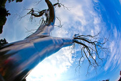A tree of metal in the National Royalty Free Stock Photos