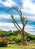 Tree With Metal Rod Support. A Green Transplant Royalty Free Stock Photos