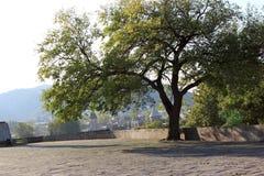 Tree on Metekhi church hill Stock Images