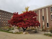 Tree in Michigan stock photos