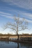 Tree in Mid-winter. Lone tree at the side of a canal in winter Stock Photo