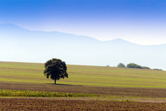 A tree in the middle of the field. Royalty Free Stock Images