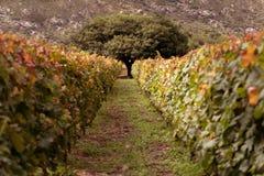 Vineyard in Cafayate, Salta, Argentina