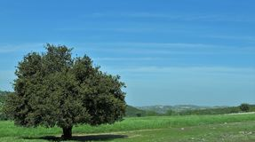 A tree in the middle in the grass stock photography