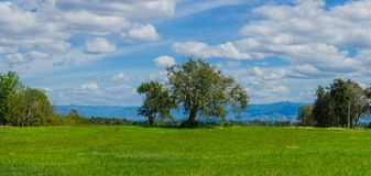 The tree in the middle of a green meadow with cloudy sky Royalty Free Stock Image