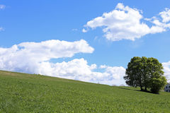 tree in the middle of the green meadow in summer Royalty Free Stock Photography