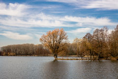 Tree in the middle of the lake. In early spring Royalty Free Stock Images