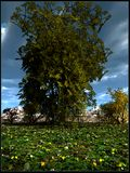 Tree in the middle of meadow Royalty Free Stock Photo