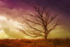 Tree in the middle of nature Stock Photos